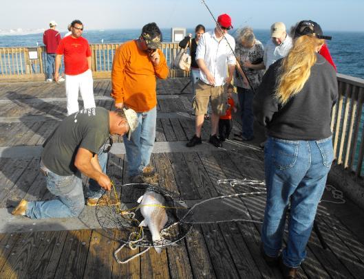 Pier pensacolapier for Tides for fishing pensacola