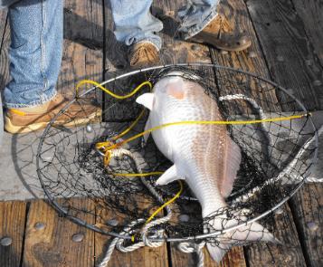 Pier fishing for Alabama fishing regulations