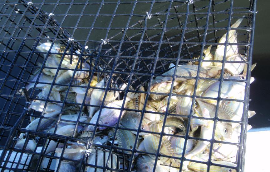 bait On bait fish trap
