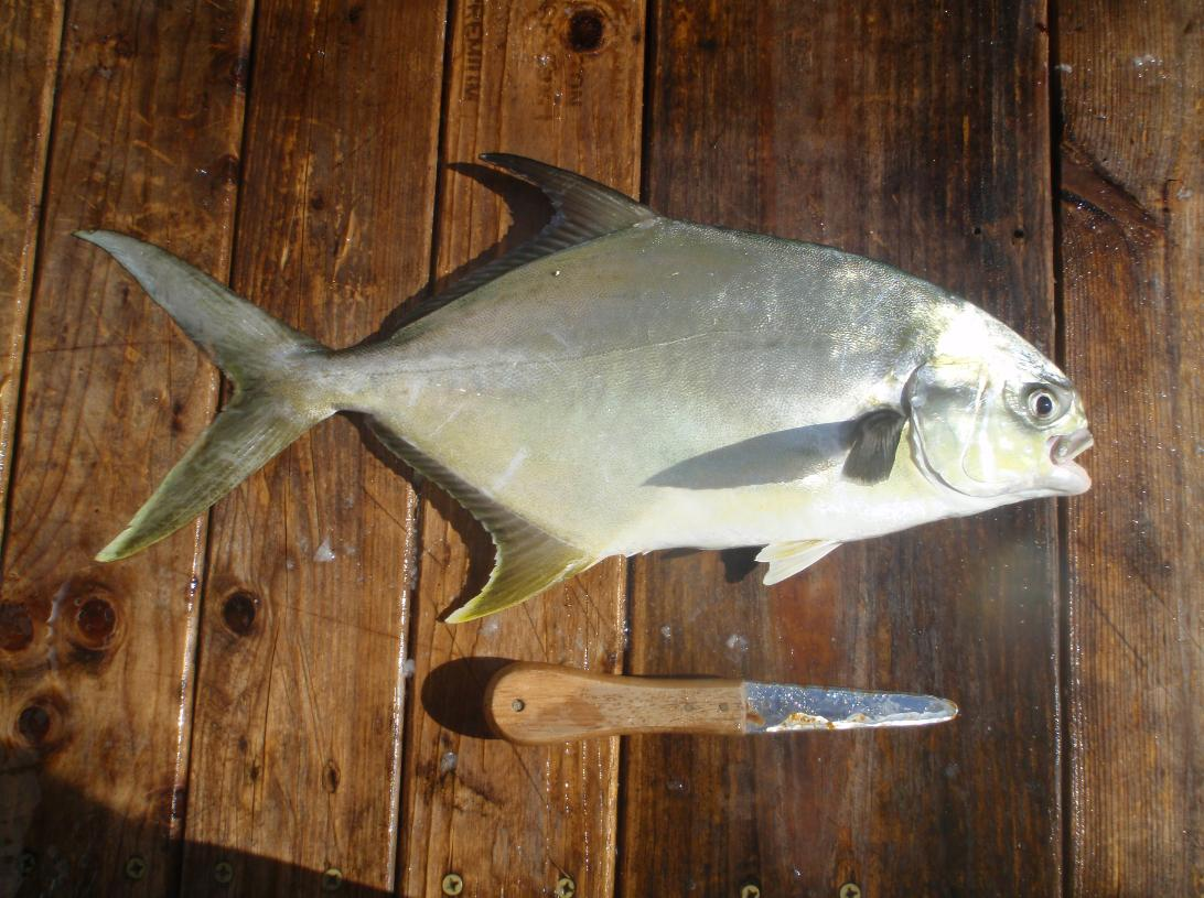 Fishing destin guide for catching pompano for Surf fishing gulf shores