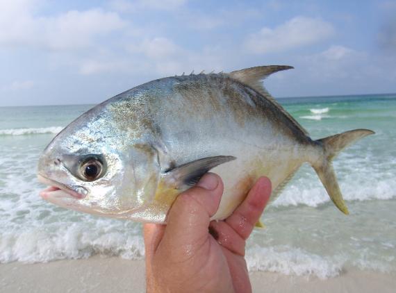 Pompano Beach Florida Visitor Guide