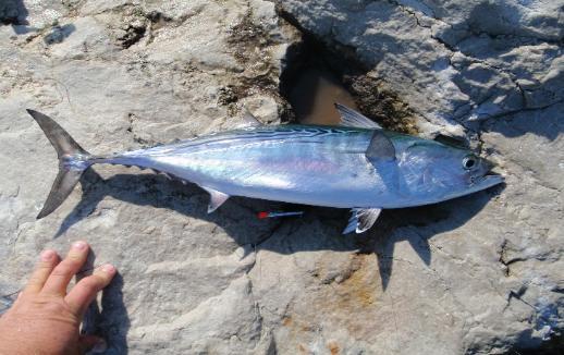 Destin east pass jetty fishing for Destin shark fishing