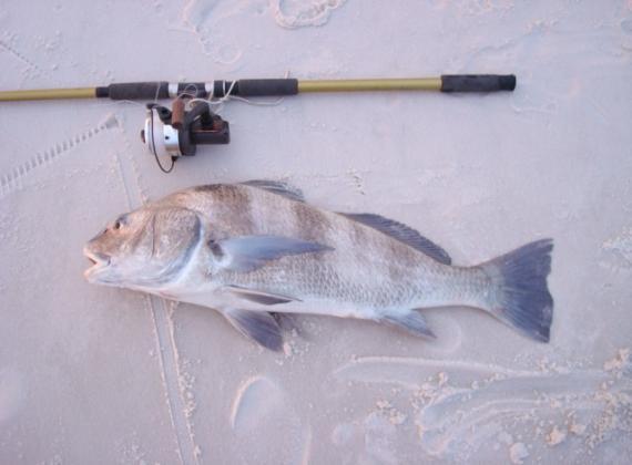 Beachfishing main for Surf fishing destin fl