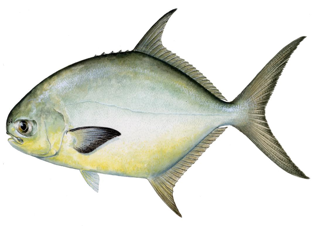 fishing destin guide for catching pompano