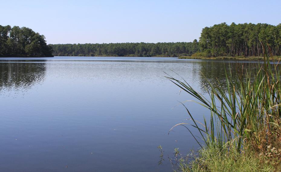Bear lake florida for Florida lake fish